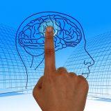 脳にタッチしている画像